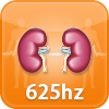 Kidney Function HT